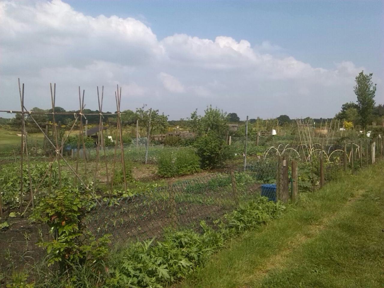 Pesticiden en meststoffen in volkstuintjes