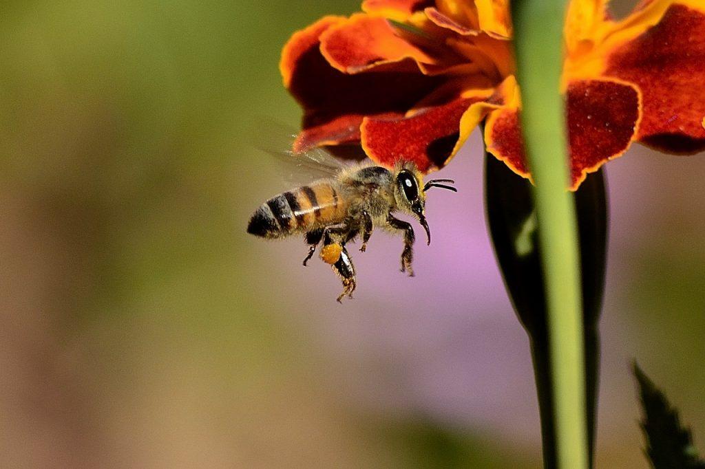 Versterken van de dracht en biodiversiteit ten behoeve van de (wilde) bij
